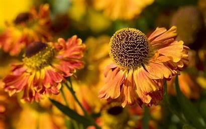 Flower Wallpapers Fall Flowers Desktop Url Source