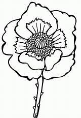 Poppy Coloring Colorare Papavero Disegno Disegni Kleurplaat Mohnblume Printable Kolorowanki Gratis Stampare Colorat Supercoloring Malvorlagen Poppies Mac Kwiat Malvorlage Maku sketch template