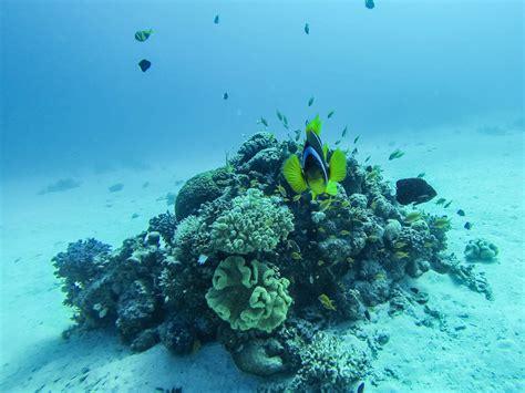 gopro hero unterwasser bildbezogen