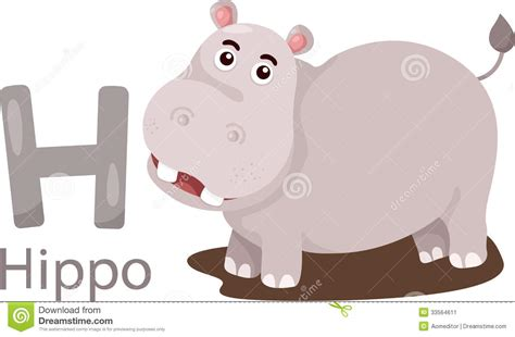 illustrator    hippo stock image image