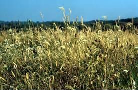 Temperate Grassland To...