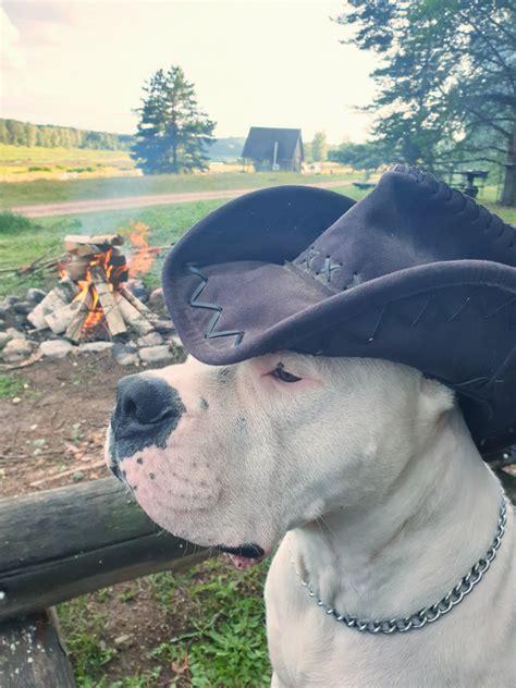 Suņa ceļojums - Ar Suni
