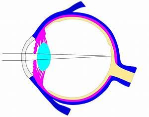 File Editable Ray Diagram Of Eye V0 Svg