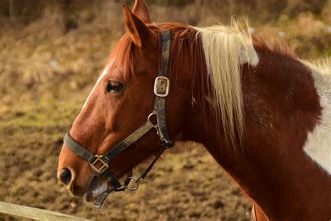 horses laminitis horse pet quarter signs state penn canna equine april pa checked fact
