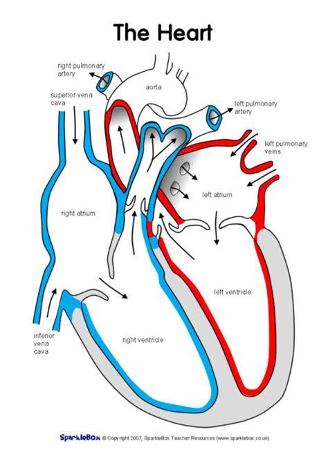 label  heart worksheets sb sparklebox