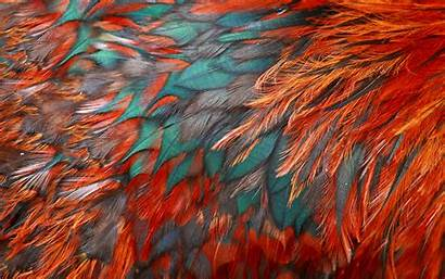 Texture Feathers 4k Textures Macro Colorful Backgrounds