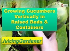 Growing Cucumbers Vertically in Raised Beds and Containers