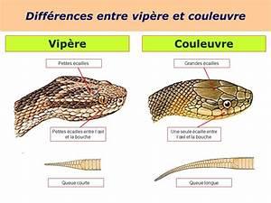 Difference Entre Catalyse Et Pyrolyse : les reptiles 5kna productions ppt video online t l charger ~ Premium-room.com Idées de Décoration
