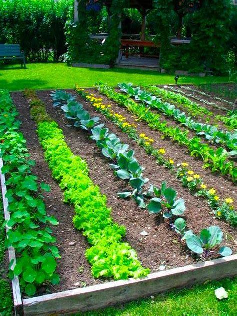 Garden Vegetarian - raised vegetable garden ideas and designs could also be