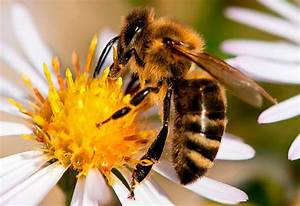 Mittel Gegen Bienen : neue hoffnung f r die bienen panorama badische zeitung ~ Frokenaadalensverden.com Haus und Dekorationen