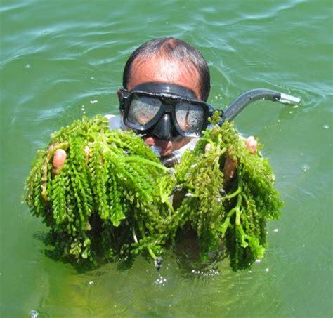 Be Cool & Enjoy Life: Discover The Panlatuan Cove, the ...