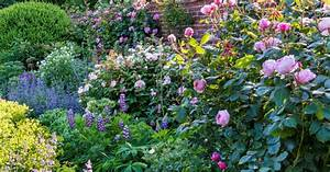 Welche Pflanzen Passen Gut Zu Hortensien : rosenbegleiter die sch nsten partner mein sch ner garten ~ Lizthompson.info Haus und Dekorationen