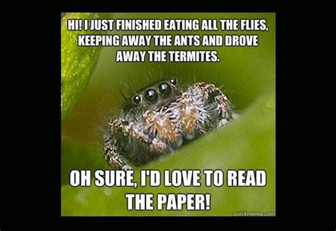 Cute Spider Memes - misunderstood spider meme 16 pics
