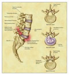 Lumbar Spine Diagram