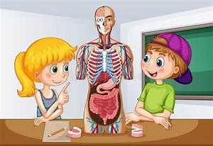 Anatomy Stock Illustrations  U2013 225 485 Anatomy Stock