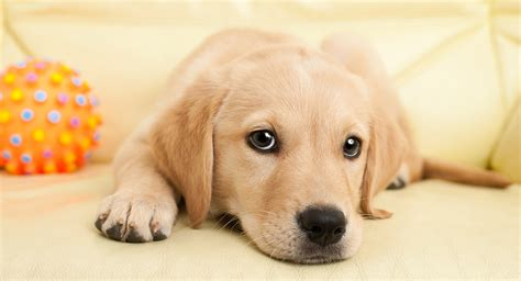 puppy pictures cute puppy names over 200 adorable ideas for naming your dog