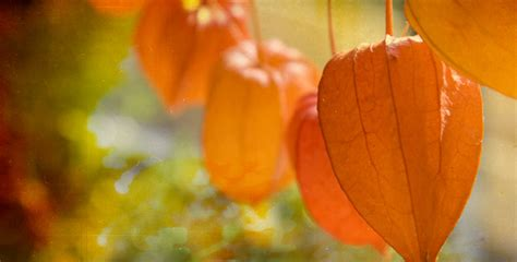 Herbst Garten Zeit by Herbstsch 246 Nheiten F 252 R Den Garten Farbenfroher