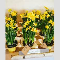 The Bloom Of Spring In A Daffodil Wedding Theme Topweddingsitescom