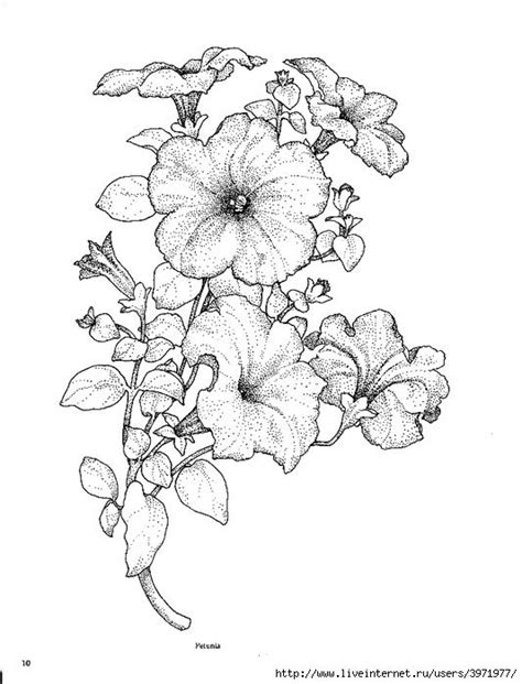 421 best flower coloring images on Pinterest