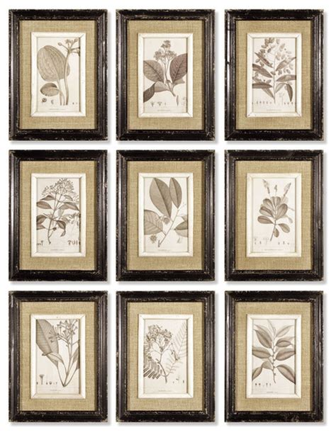 save to the uttermost framed naturalist prints set of 9 rustic prints and