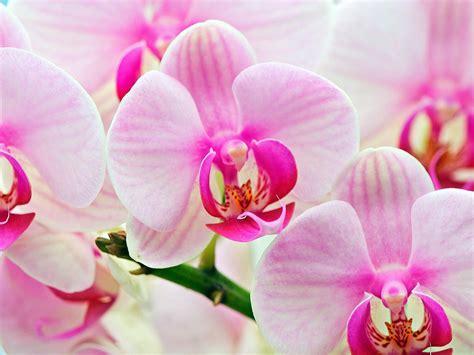 kembang top orchid flower car interior design