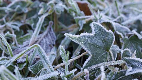 Filefrost In My Garden (11621596336)jpg  Wikimedia Commons