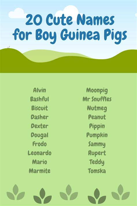 names for pigs boy guinea pig names list unique male guinea pig names cute names