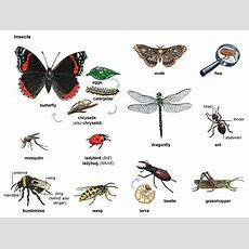 Insect Noun  Definition, Pictures, Pronunciation And Usage Notes  Oxford Advanced Learner's
