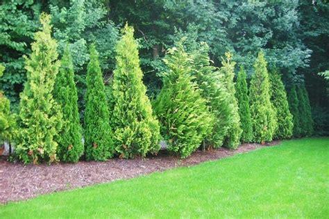 Garten Pflanzen Sichtschutz|garten Pflanzen Sichtschutz