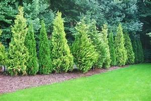 Pflanzen Japanischer Garten : garten pflanzen sichtschutz garten pflanzen sichtschutz huv design nowaday garden ~ Sanjose-hotels-ca.com Haus und Dekorationen