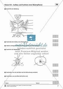 Aufbau Der Zwiebel : lzk klasse 5 6 zum thema aufbau und funktion einer ~ Lizthompson.info Haus und Dekorationen