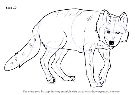 step  step   draw  mexican wolf
