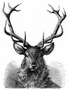 """stag engraving 