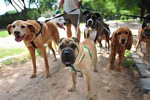 How to find a pet sitter for your dog for Babysitter dog sitter