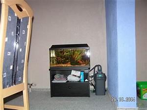 60 Liter Becken : aquarium von matze 2999 becken 2035 ~ Michelbontemps.com Haus und Dekorationen