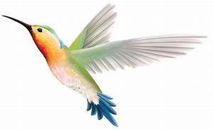 Hummingbird clipart hummingbird clip art clipartix 2 ...
