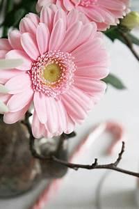 Gelbe Rose Bedeutung : blumensymbolik 9 blumen und ihre bedeutung frisch vom gaertner ~ Whattoseeinmadrid.com Haus und Dekorationen