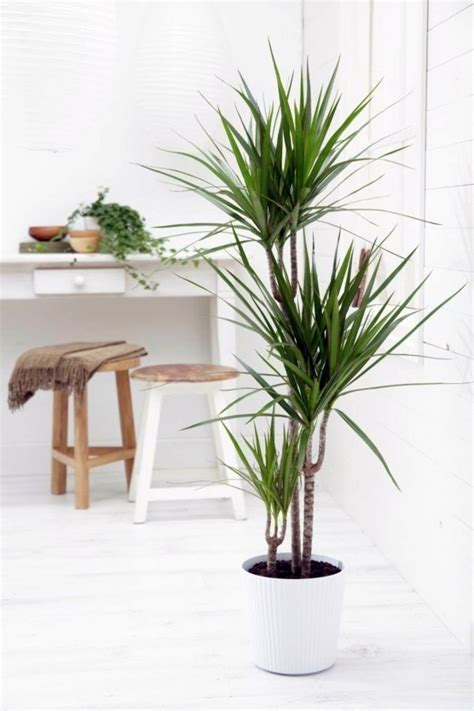 indoor small trees tropical room decor small indoor palm trees indoor plants palm trees types interior designs
