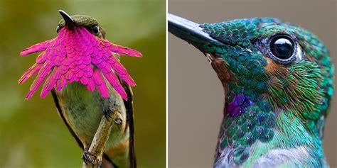 20 Vivid Hummingbird Closeups Reveal Their Incredible