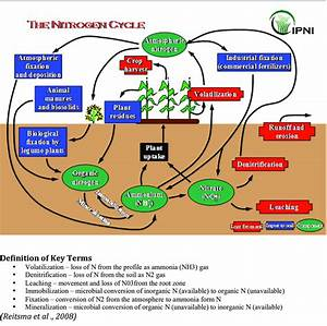 The Nitrogen Cycle   Courtesy International Plant Nutrition Institute