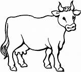 Coloring Pages Cow Printable Animal sketch template