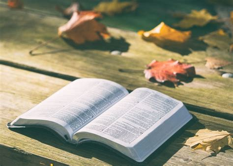 picture pages bench bible book dry leaves knowledge