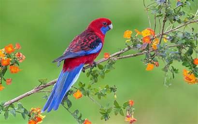 Parrot Wallpapers Animals