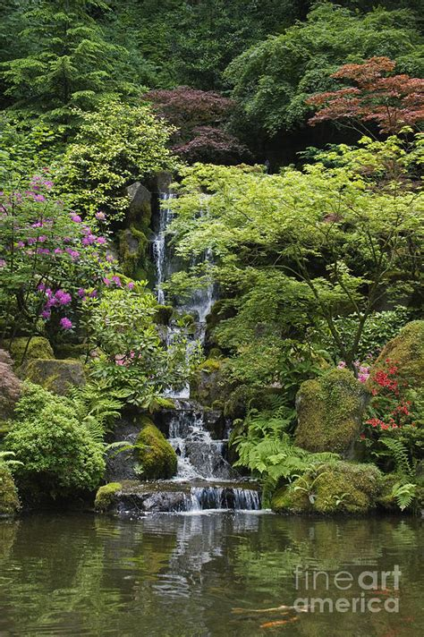 japanese garden portland oregon photograph by craig lovell