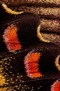 Macro, Photography, Reveals, The, Dazzling, Scales, And, Multi