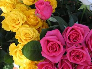 Beautiful Roses Pictures ~ Zee Post