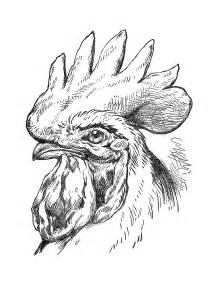 Rooster Clip Art Black and White