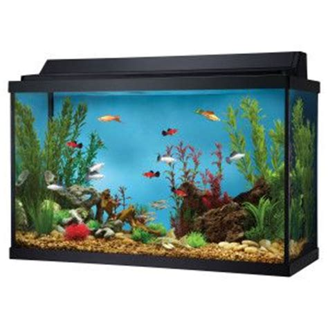 Lava L Fish Tank Petsmart by Fish Tank Decor Decor Ideas