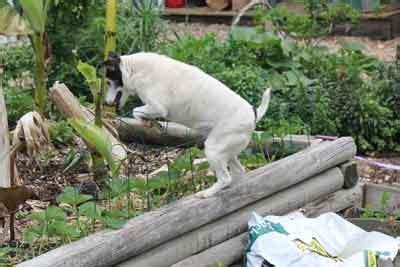 keep dogs out of garden jim s garden garden of