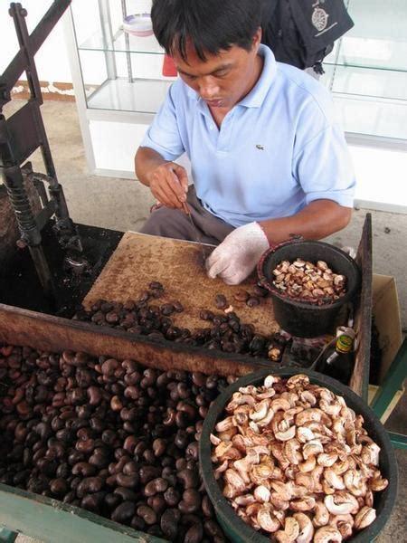 cashew nut factory photo